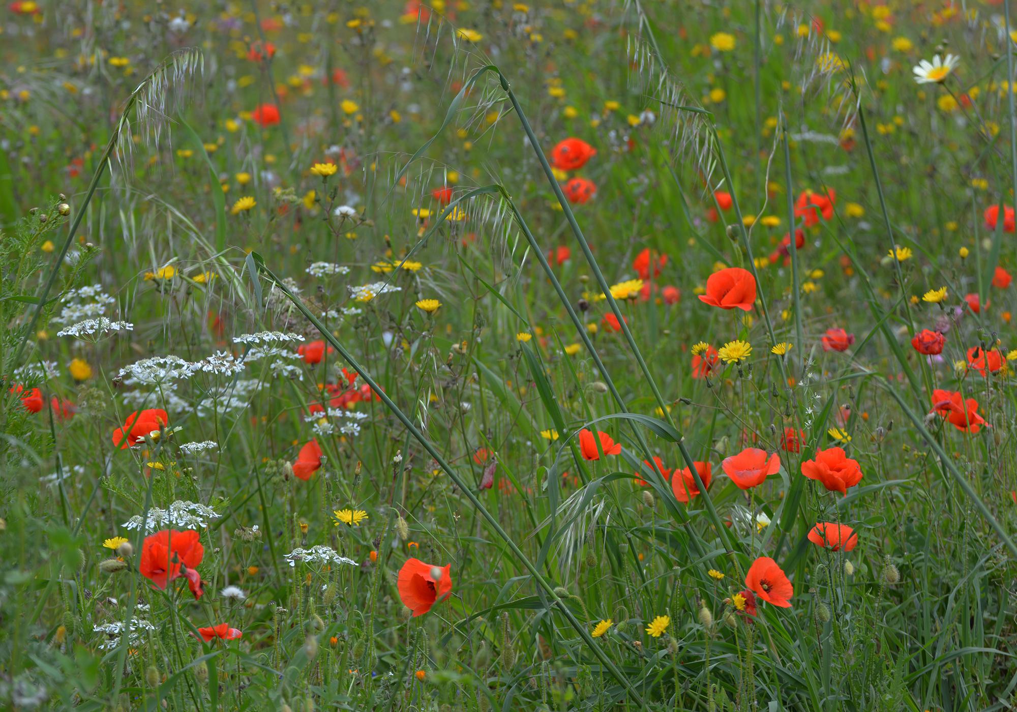 Per gli amanti della natura
